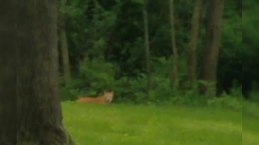 Des Moines Police Confirm Mountain Lion Sighting in South Side Backyard