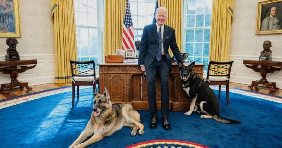 Joe Biden's Oval Office First Dogs Tweet Sparks Demands for WH Cat, Trolling on Covid Checks, and Plea From Porn Star
