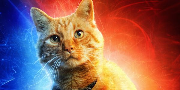 Captain Marvel's Brie Larson And Samuel L. Jackson Tribute Goose The Cat For Love Your Pet Day