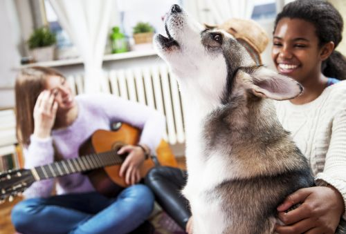 Love Those Singing Dog TikToks? Two Vets Explain Why Dogs Do It